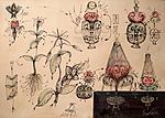Vortex anatomy of plants