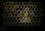 hexagon field