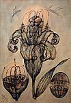 Lilium candidum arhetype
