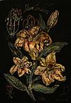 Lilium candidum 5000