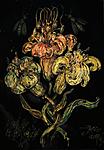 Lilium candidum 3