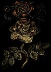 Rosa Alba helix 33