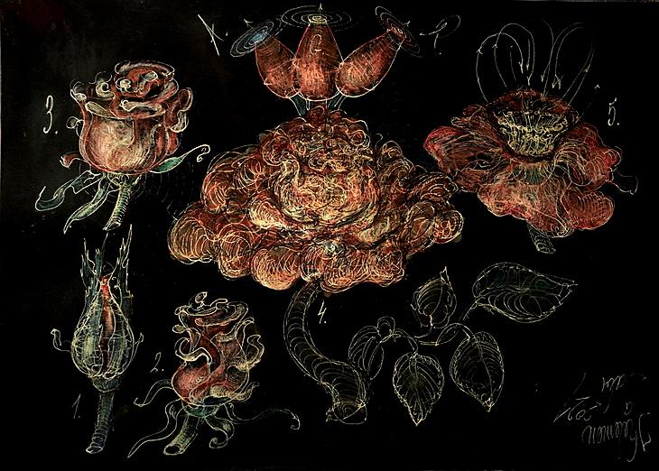 Rose morphogenesis