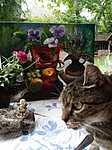 Fotó mit meiner Katze und Stilleben im Garten