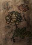 Rosa november