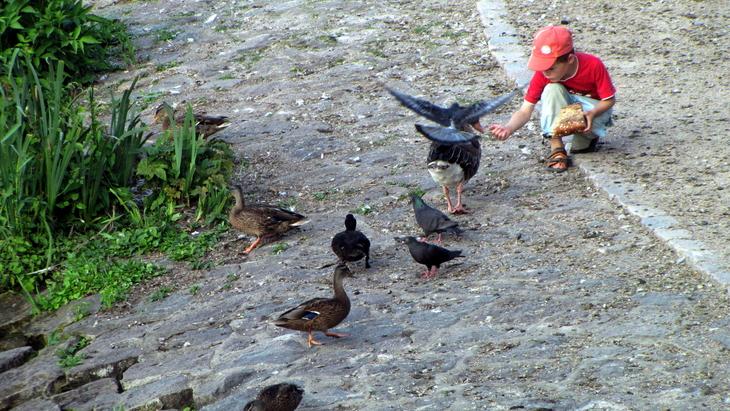 IMG_2270 - Why We Love Hamburg - Feeders 6 Breeders