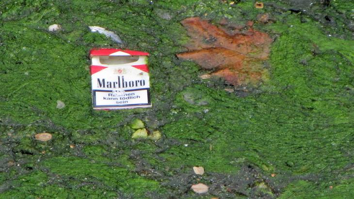 IMG_2333 - Nature & Trash - Rauchen Kann Tödlich Sein