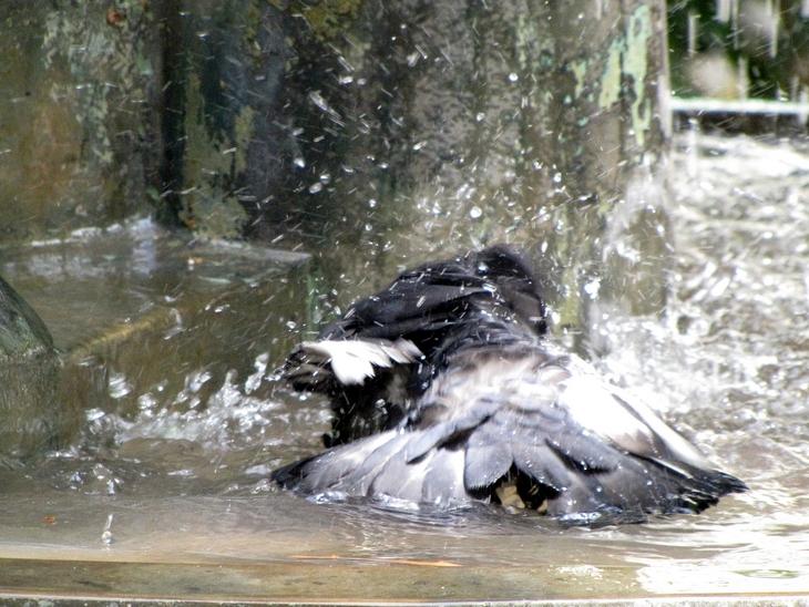 IMG_3083 - Nature`s Beauties  - Splish Splash