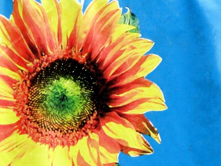 IMG_3709 - Schlagermove 2009 - Sunflower