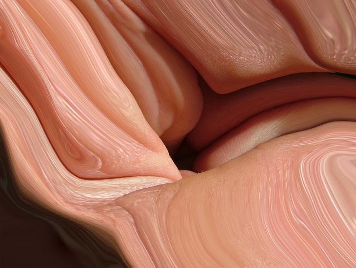 inner skins 7