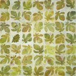 Série différence  The oak leaf 100x100