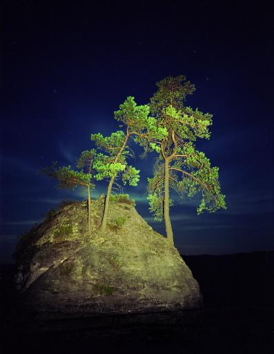 """untitled, series""""night trees"""""""