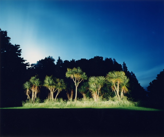 "untitled, series""night trees"""
