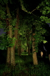 "untitled, series""night way"""