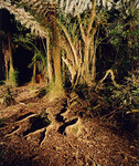 "untitled, series""night jungle"""