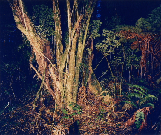 "untitled, series""night jungle"""