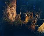 """untitled, series""""night ways"""""""