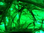 greenglas1