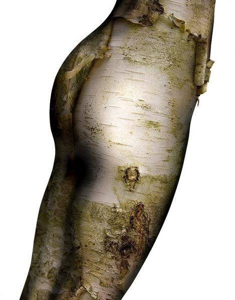 birch skinned
