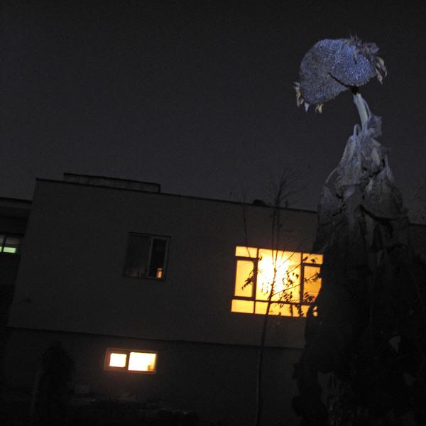 Night Sentinel