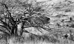 Animal/Tree