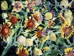 Indian-blanket-flowers-painting