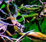 Lingering Wood