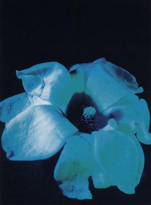 Eliska Bartek Blume blau