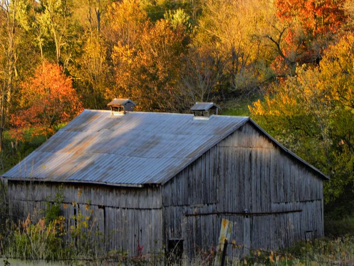 fall over the farm