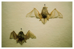 Untitled (bats 5-6)