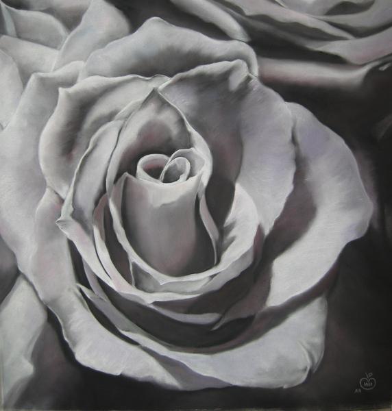 blach & white rose