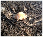 shell in water
