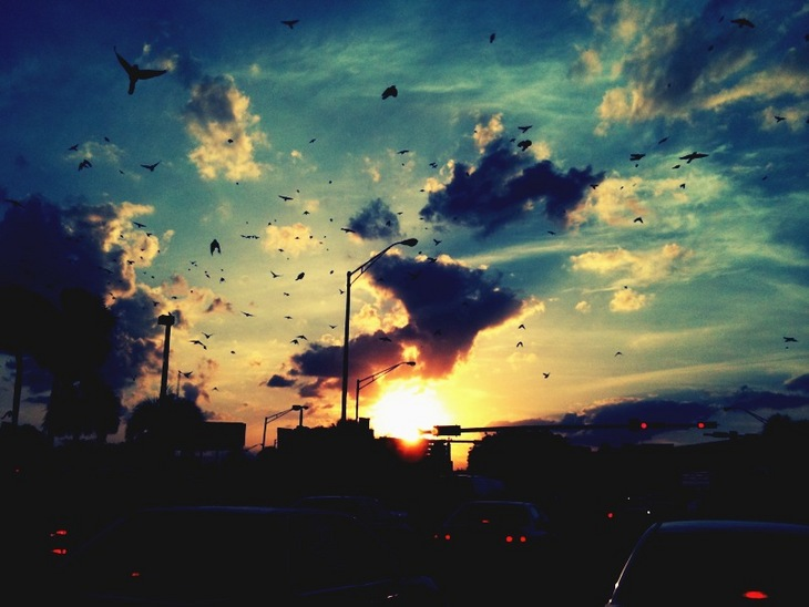 Bird Rd