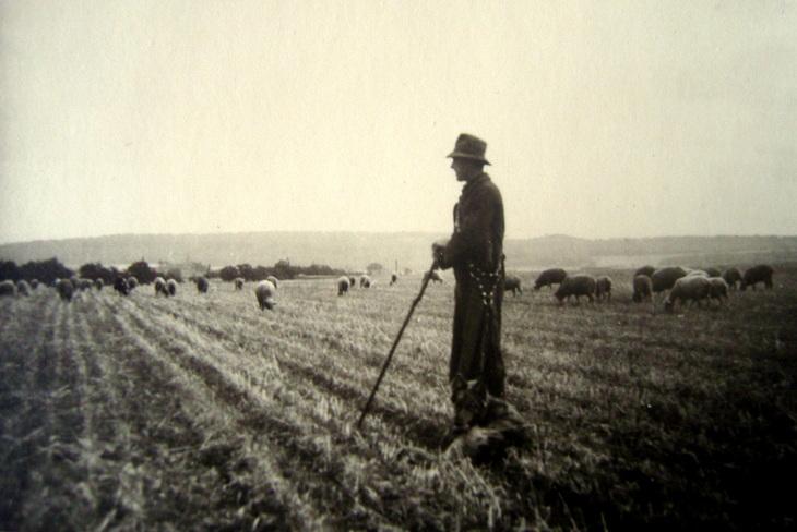 der Schäfer wartet, die Schafe auch