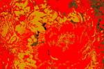 Blumen im roten Meer