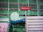 rosenstr - Kopie (3) - Kopie