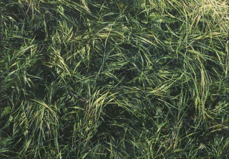 Gras III (Detail)