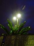 nachtblühen