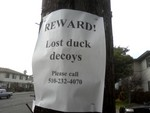lost decoys