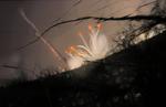 Blumen Sonnenaufgang 2