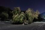 "untitled, series""night landscape"""