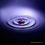 Waterdrops 69
