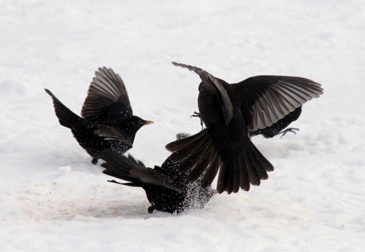 BIRDS IN THE SNOW 3