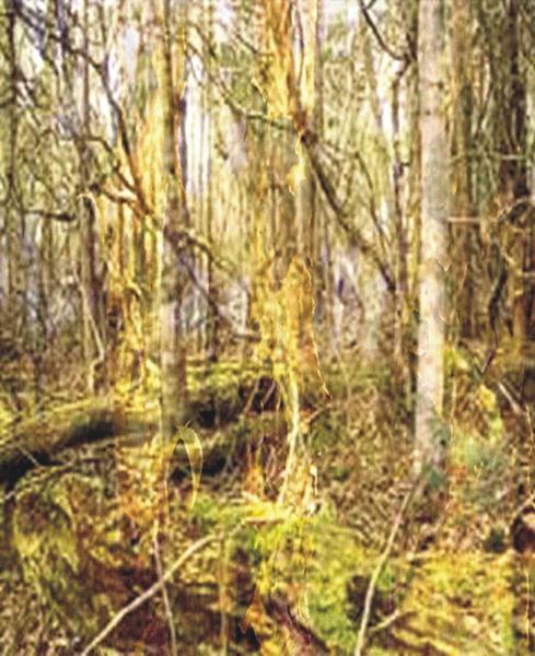 Eucalyptus Dreaming