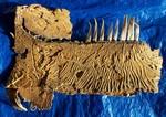Ancient Fish (strunius kurshi)