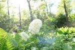 the nature around me - 3
