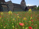 Klostergarten Insel Reichenau - Bodensee