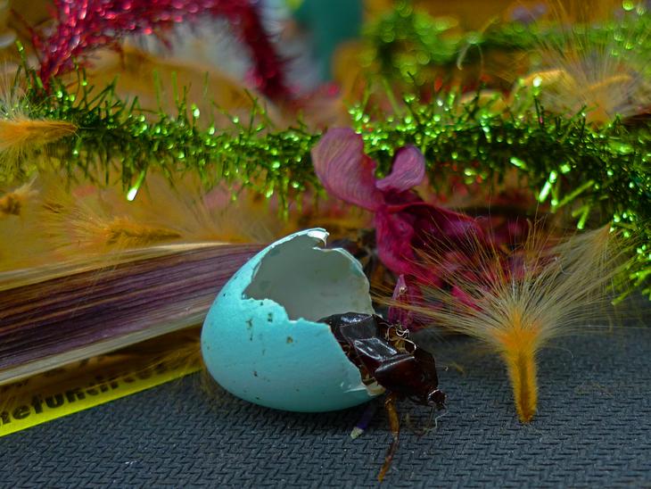 Cockroach Egg