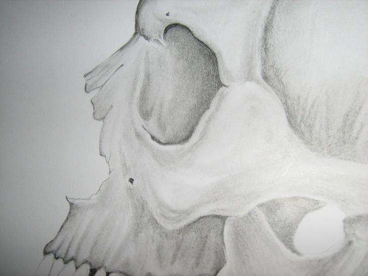 human skull study detail