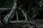 "untitled, series ""night tree"""